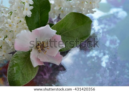 Flower and reflection in pure water, lilac, quince - stock photo