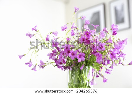 Flower Arrangement Of Primrose