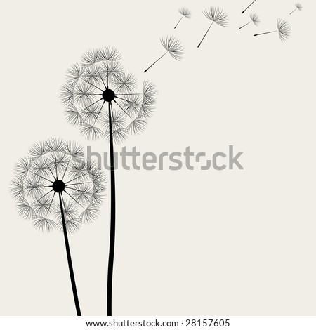 Flower background - Dandelions. 