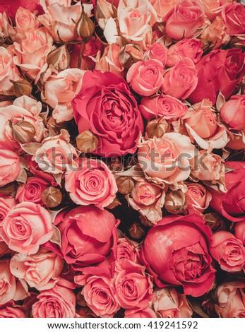 Flower background. Roses background. Pink flower. Close-up flowers. Flower wallpaper. Floral texture. Flower pattern. Flower decoration. - stock photo