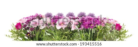 Flower banner with pink flowerbed of  gerber, chrysanthemum and daisies, panorama, isolated - stock photo