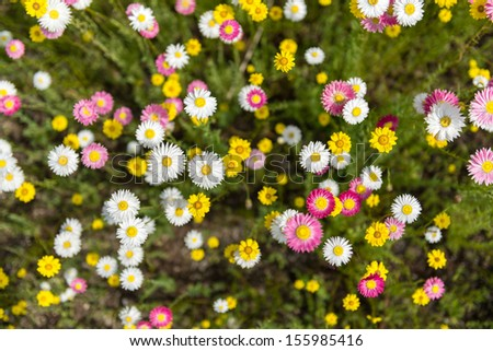 Flower bed from above - stock photo