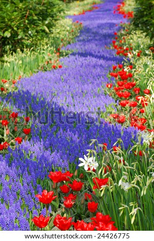 Flower bed with blue and red flowers. - stock photo
