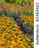 flower bed with marigold flowers - stock photo