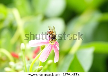 Flower bee, bee on flower, bee pollen, summer bee, spring bee, honey bee, honeybee flower, bee macro, fly bee:Close up,select focus with shallow depth of field. - stock photo