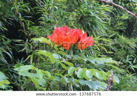 Flower Blooming in Maui Hawaii Bamboo Forest - stock photo