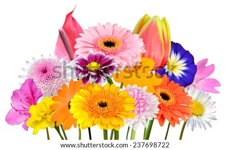Flower Bouquet  Collection of Various Colorful Flowers and Wildflowers Isolated on White Background. Vibrant Red, Blue, Pink, Purple, Yellow White, and Orange Colors. Bunch wildflowers