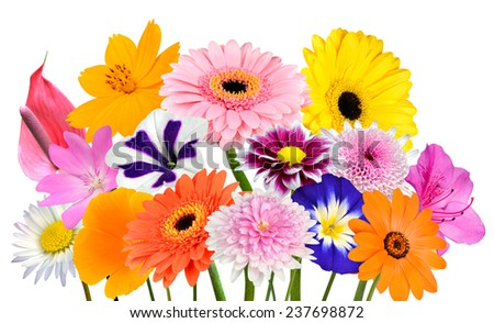 Flower Bouquet  Collection of Various Colorful Flowers and Wildflowers Isolated on White Background. Vibrant Red, Blue, Pink, Purple, Yellow White, and Orange Colors. Bunch of  wildflowers - stock photo