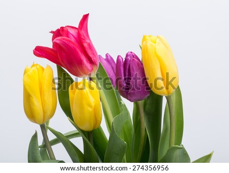 Flower bouquet from colorful tulips