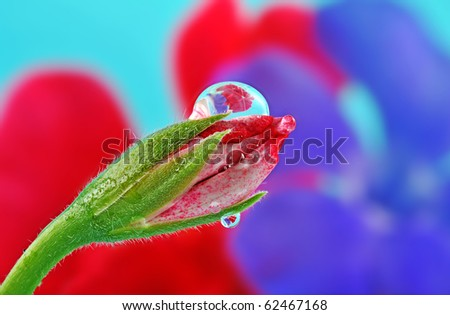 flower bud and beautiful rain drop - stock photo