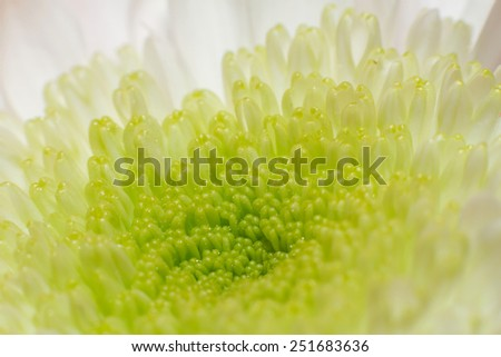 flower bud with petals close up - stock photo