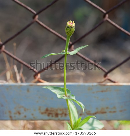 Flower buds inside the palisade - stock photo