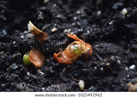 Flower bulbs are growing in the ground.