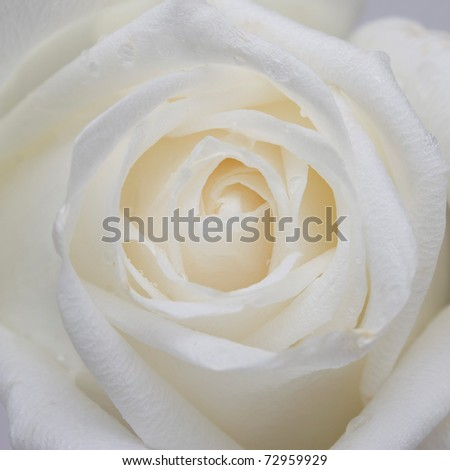 flower close up background - stock photo