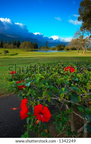 Flower, cloud & mountain on Kauai Hawaii. More with keyword Series001E. - stock photo