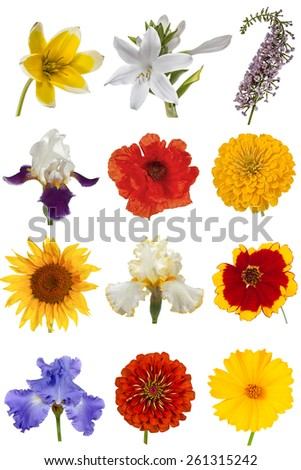 Flower collection, isolated on white background  - stock photo