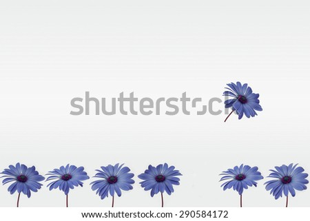 flower decoration - flowers in row - empty space for text