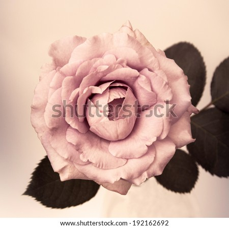 flower design  on black Vintage beautiful flowers made with color filters - stock photo