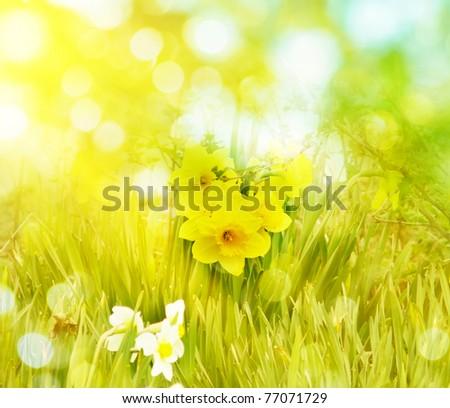 flower field - stock photo