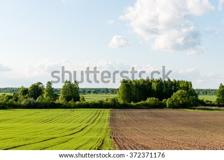Flower field and blue sky with sun in summer - stock photo