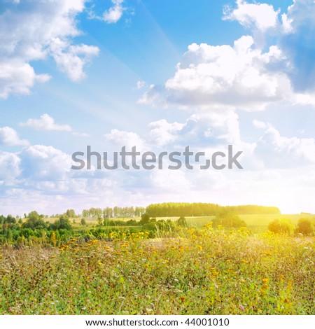 Flower field,blue sky and sun. - stock photo