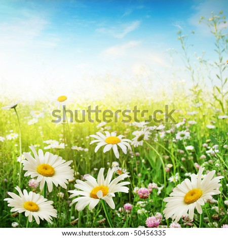 Flower field on a sunny day. - stock photo