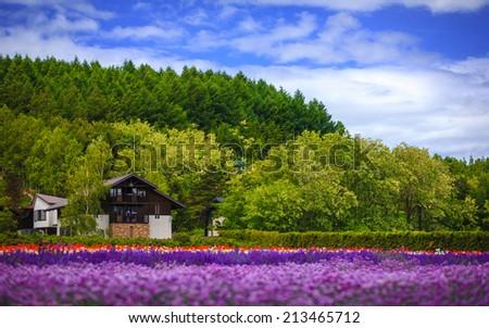 Flower field under cloud sky, Furano, Hokkaido, Japan - stock photo