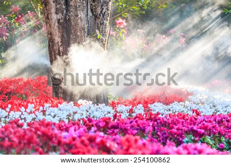 flower garden (cyclamen flowers) - stock photo