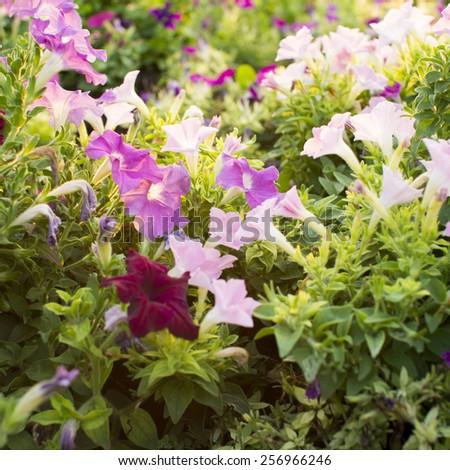 Flower garden in the morning - stock photo