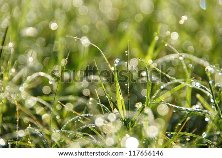 Flower grass and dew impact sunlight in the morning. - stock photo
