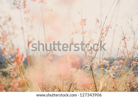 flower grass at relax morning time with warm tone vintage - stock photo