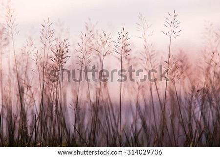 flower Grass blowing in the wind motion blur sky background - stock photo