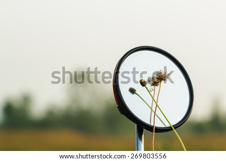 Flower grass with water drops in a mirror, a motorcycle,With pattern new - stock photo