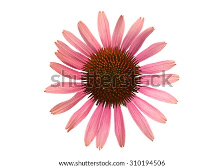 Flower head closeup isolated on white background