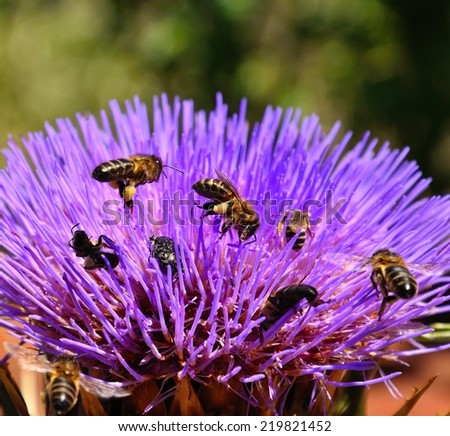 Flower head of wild artichoke with insects and bees around - stock photo