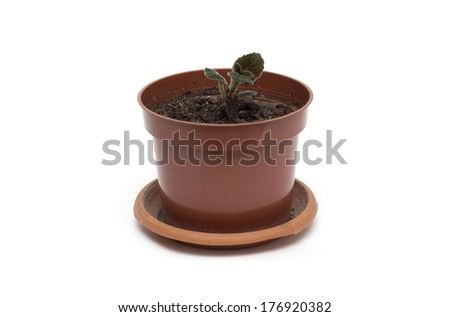Flower in a pot.