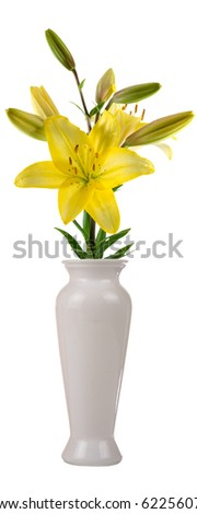 Flower in a vase isolated on white background - stock photo