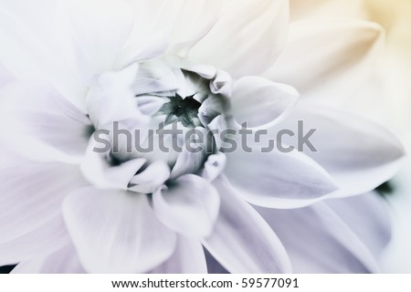 flower in blue tone, very shallow focus - stock photo