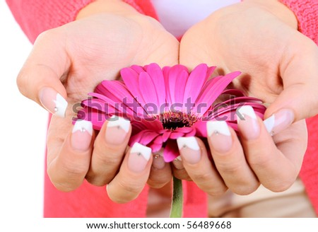 flower in female hands. Isolated on white - stock photo