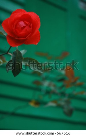flower in front of house - stock photo