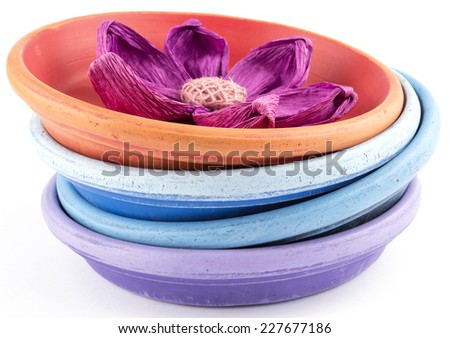 flower in pots