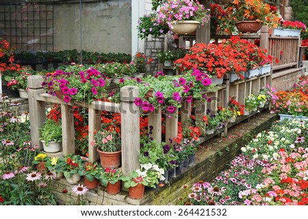 flower in pots on sale at the local garden center - stock photo
