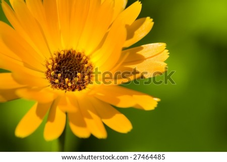 Flower in the summer sun - stock photo