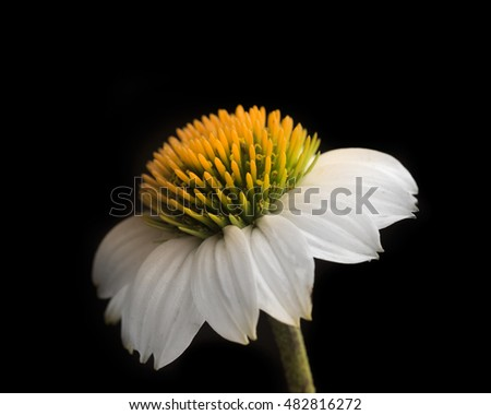 flower isolated
