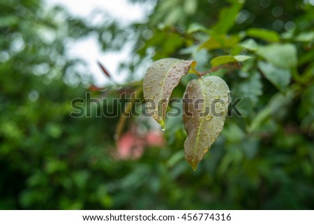flower  leaves