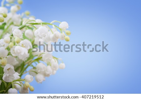 Flower lily of the valley on a blue background - stock photo