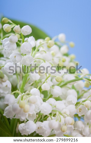 Flower lily of the valley on a blue background (soft focus) - stock photo