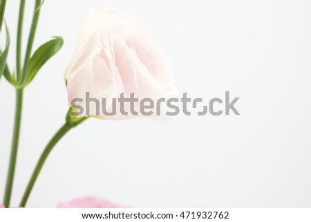 Flower Lysianthus on white background
