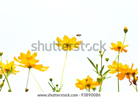 Flower Marigold and honey