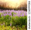 Flower meadow in Alaska - stock photo